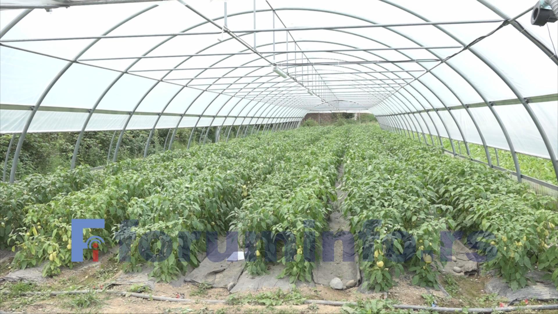 Бесповратна средства за младе пољопривреднике/це у Пријепољу