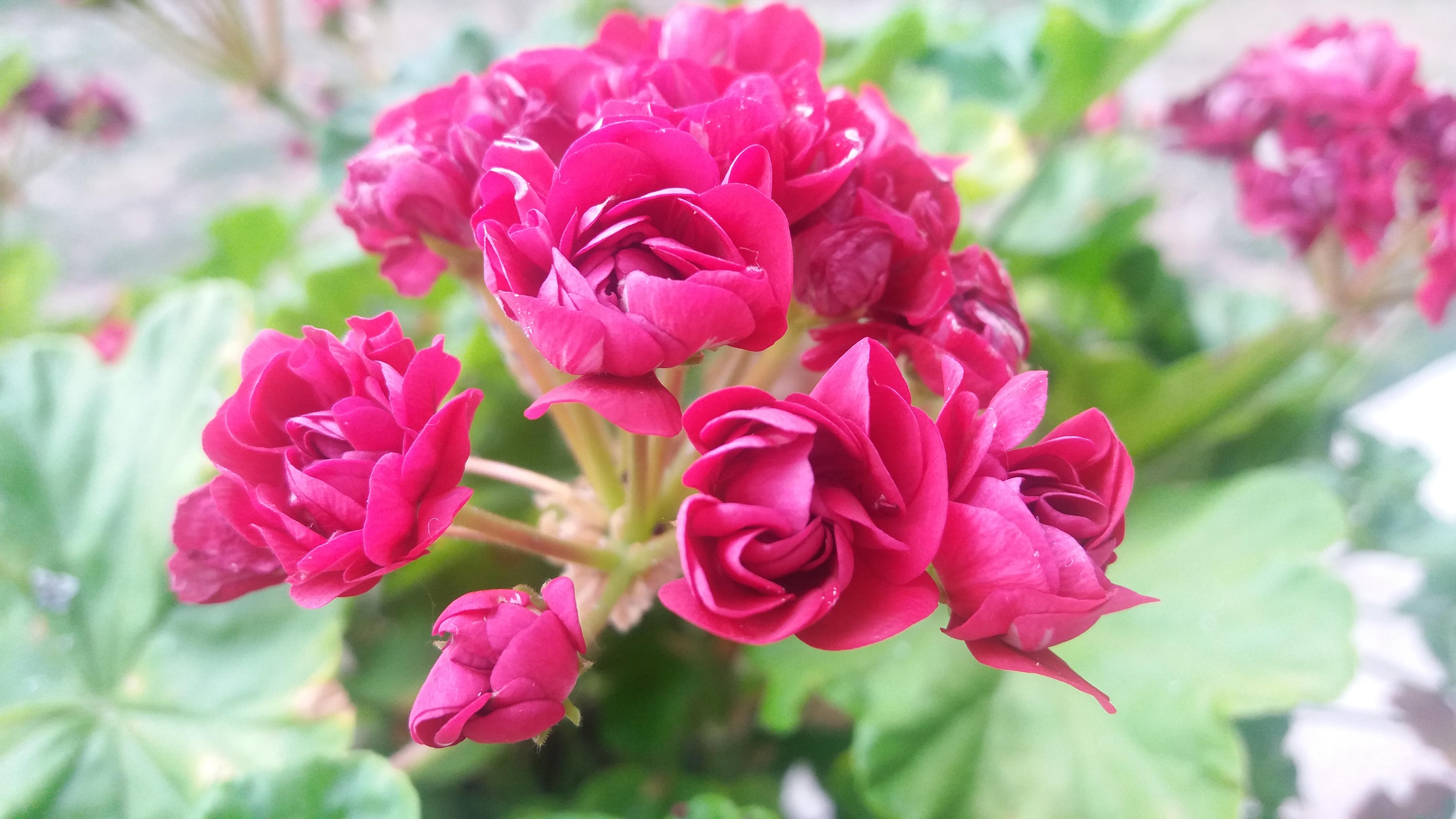 """Почело гласање за најлепшу башту у акцији """"За цветне оазе Пријепоља, Нове Вароши и Прибоја"""""""