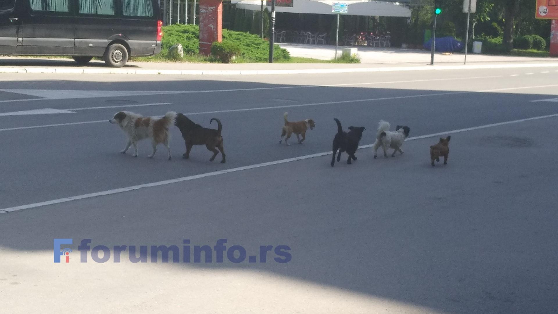 Има ли решења за проблем паса луталица у Пријепољу? (Анкета)
