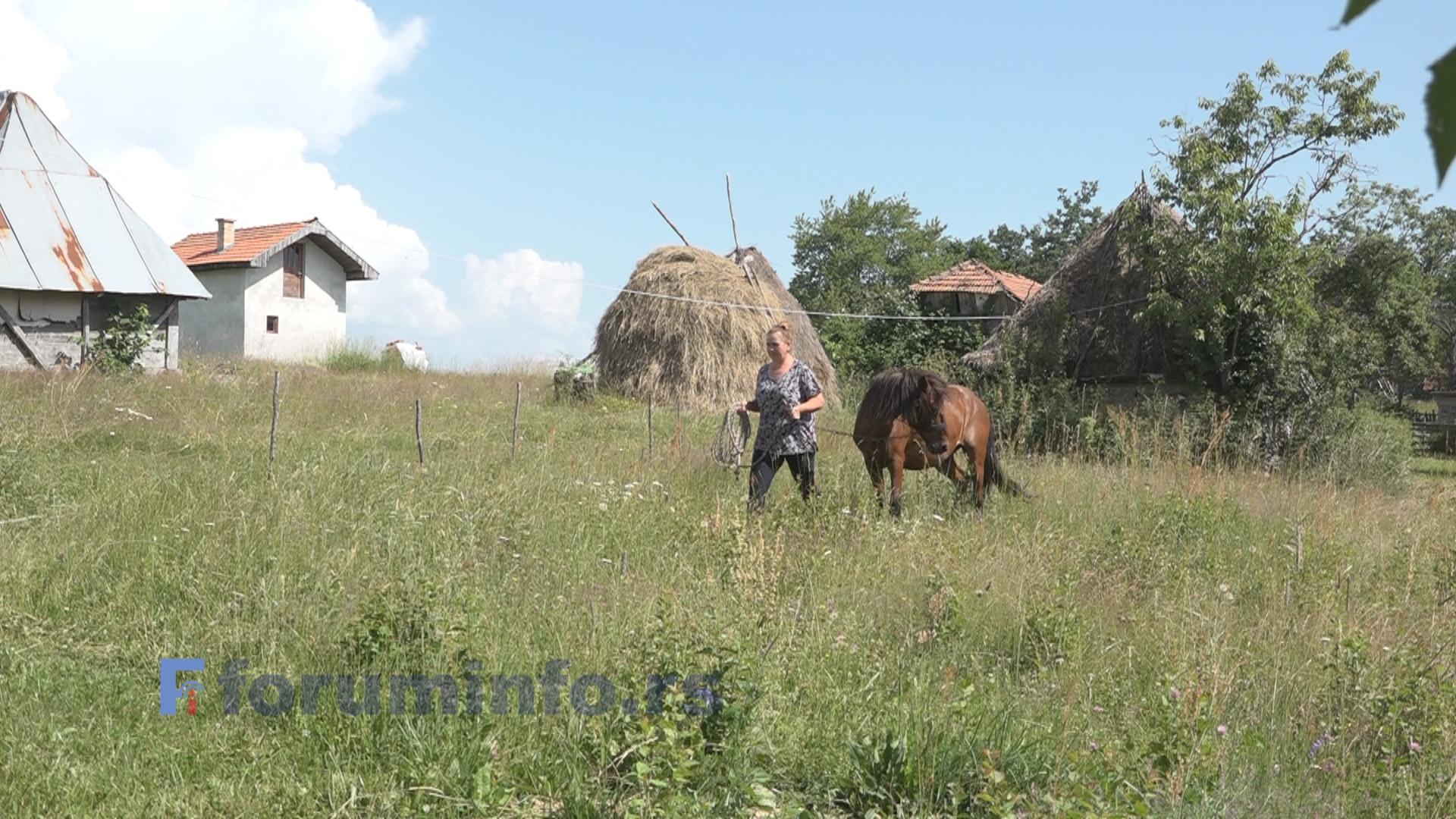 Између њиве и пијаце – пољопривредна  прича Драгице Стојадиновић
