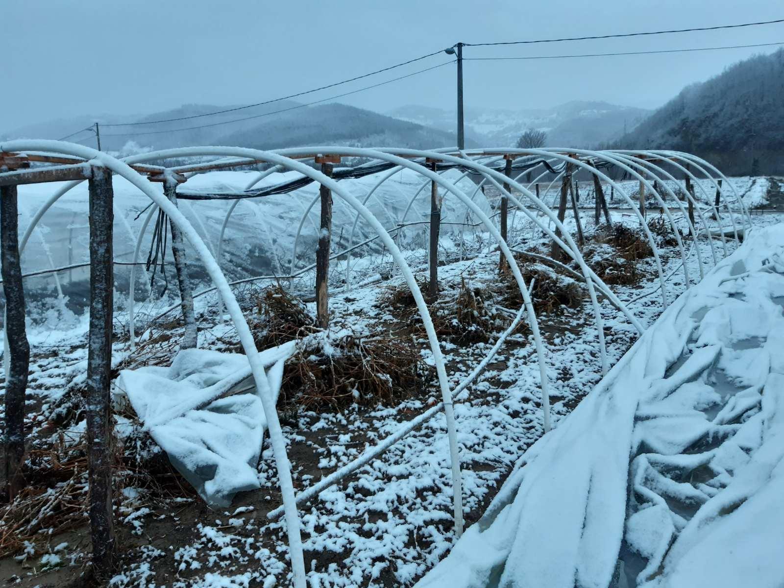 Јак ветар оштетио пластенике – И даље без струје поједина пријепољска села