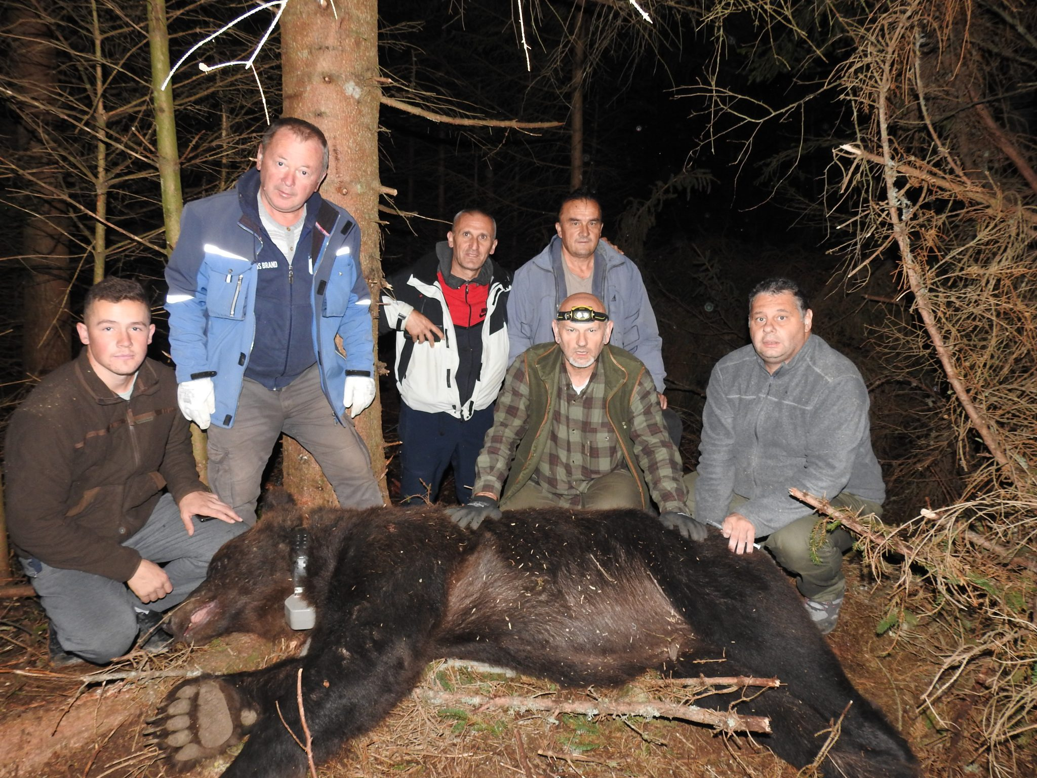 Биолози на Јадовнику маркирали још једног медведа и вучицу, први пут у Србији