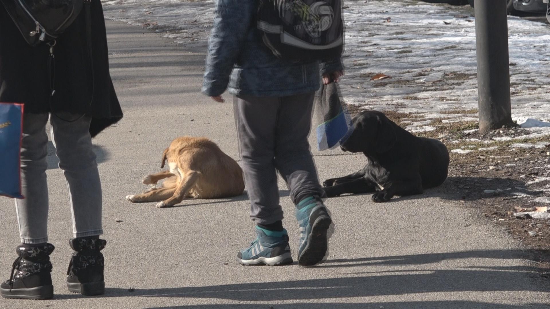 Ванредна ситуација због паса луталица укинута – 17 паса уклоњено у суботњој акцији