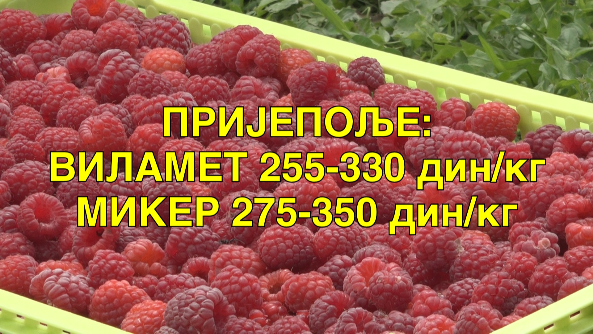 Пријепоље: Виламет 255-330 дин/кг – Микер 275-350 дин/кг